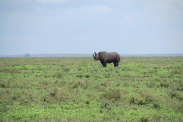 7-Day Private Tour Lake Manyara...