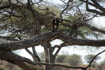 7-Day Safari: Serengeti Ngorongoro Crater and Zanzibar Island from...
