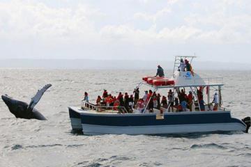 Croisière d'observation des baleines...