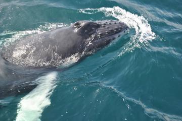 Walbeobachtung in Samaná und Abenteuer auf Cayo Levantado– ab Punta...