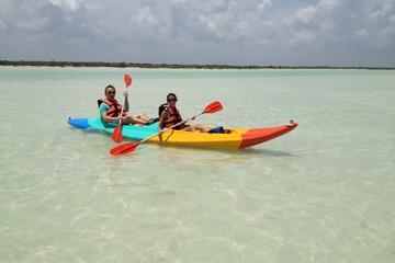Kayaking Tour Through the Mangroves ...