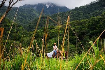 Jungle Waterfall Horseback Ride Tour...