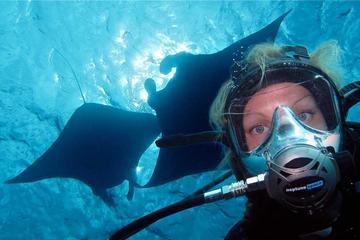 Diving at Manta point