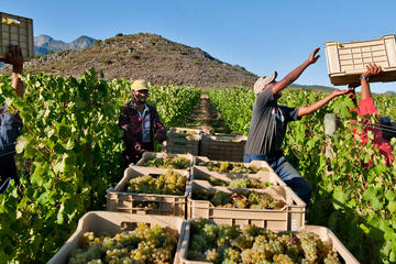 3 Regions Wine Tour from Cape Town