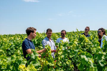 Tour to the Champagne Region from...