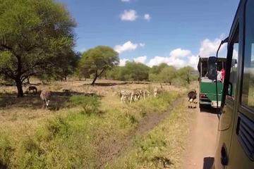 Full-Day Safari Adventure Tour from...