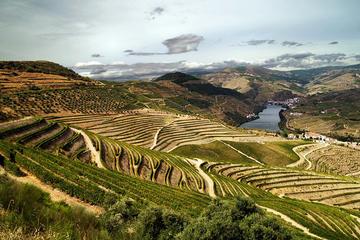 Excursão privada: Douro Vinhateiro com degustação de vinho do Porto