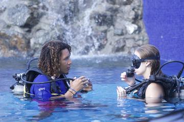 PADI Discover Scuba Diving Program for Beginners