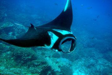 PADI Scuba Diver Certification Course