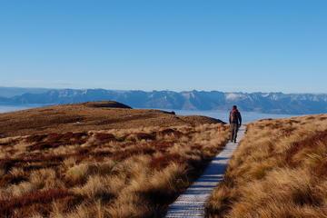 Fiordland Adventure Day Trip