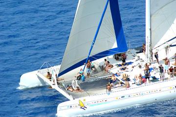 Excursie van het eiland Saona per catamaran en speedboot
