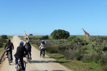 Safari-Fahrradtour ab Kapstadt