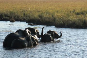 5-Night Tour of National Parks in Tanzania from Arusha