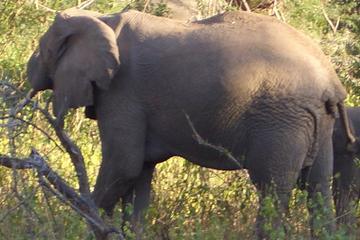 3-Night Safari from Nairobi: Lake Nakuru and Masai Mara