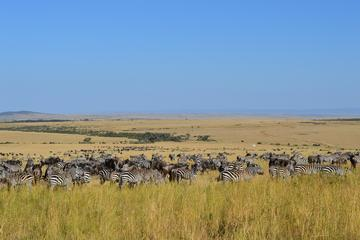 6-Night Masai Mara National Reserve Tour: Nakuru National Parks...