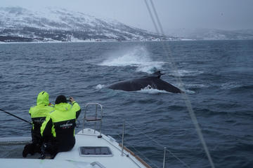 Whale Watching on a Catamaran in Tromso