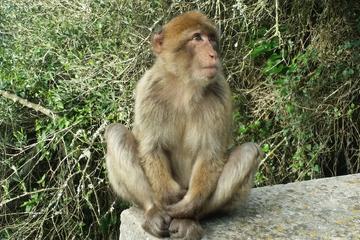 Escapada privada de medio día a Gibraltar desde Marbella
