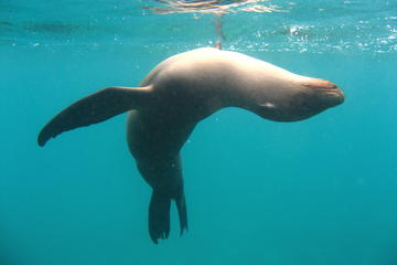 5-Day Galapagos Islands Highlights Tour