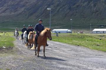 The Experience Small group Horse Tour