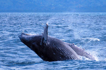 Punta Cana Day Trip: Samana Whale...