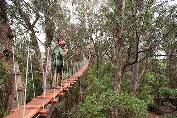 6 Line Treetop Zip Tour