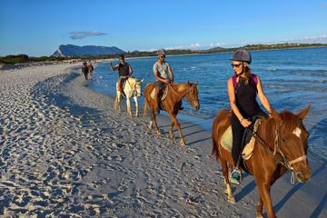 Cagliari: Horseback Riding Tour