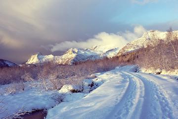 3-Hour Nature Winter Hike in Lofoten