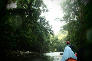Excursion d'une journée dans la forêt équatoriale de Taman Negara