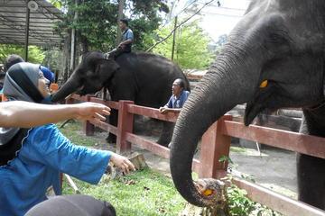Kuala Gandah Elephant Sanctuary Tour von Kuala Lumpur