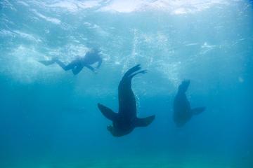 Swim with Seals Adventure Mornington...