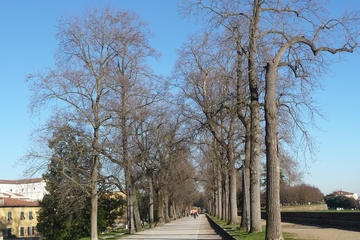 Private Tour: Historic Lucca by Bike