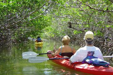 2 Hour Kayak Eco Tour