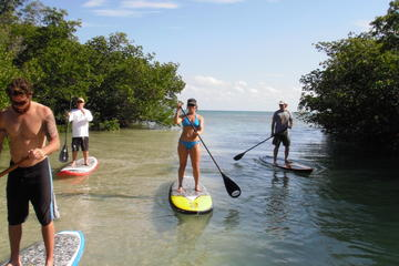 2 Hour Paddle Board Eco Tour