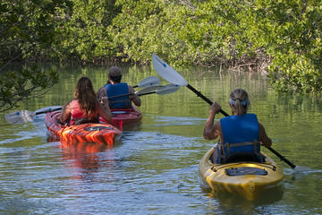 Key West Half Day Kayak Rental