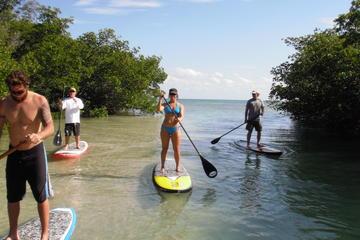 Tour durch das Key West-Mangrove-Ökosystem mit dem Paddleboard