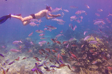 Full-Day Catalina Island Snorkeling Tour from Bavaro