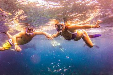 Journée complète de plongée avec tuba, sur l'île de Catalina, au...