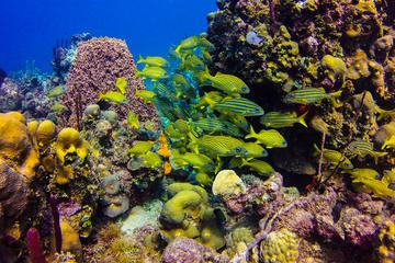 Journée complète de plongée sous-marine, sur l'île de Catalina, au...