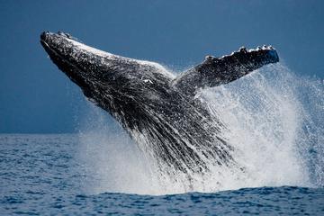 Avistamiento de ballenas: Ballenas...