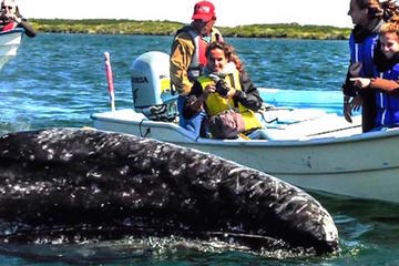 Gray Whale-Watching 2-Day Experience in Magdalena Bay