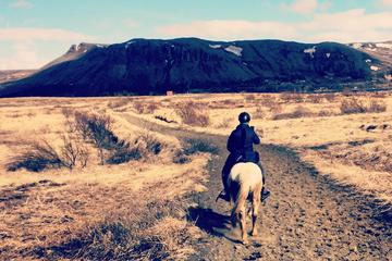 Private Horse Riding Tour of Lake Hafravatn from Reykjavik