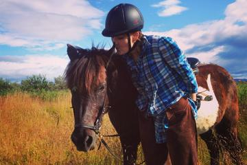 Private Horse Riding Tour on Úlfarsfell Mountain with Pickup from...