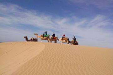Promenade de 3heures sur un dromadaire à Essaouira