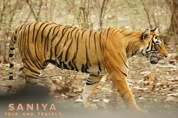 Rajasthan Wildlife Safari Tour With  Taj Mahal