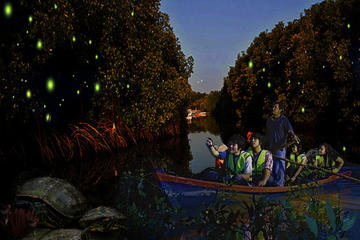 Fireflies Night Tour from Singapore