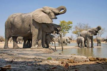 2-Day Amboseli National Park Safari from Nairobi - free airport pick...
