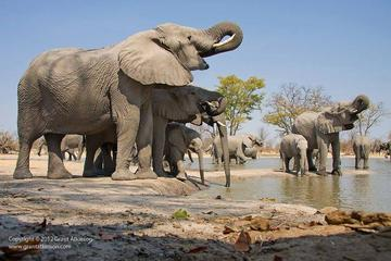 2-Day Amboseli National Park Safari from Nairobi