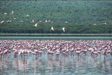 Lake Nakuru National Park Day Tour ...