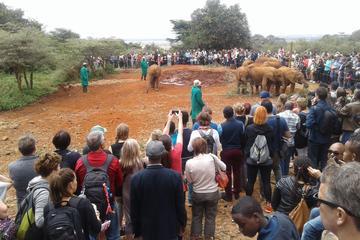 Nairobi National Park, David Sheldrick Elephant Orphanage, Giraffe...
