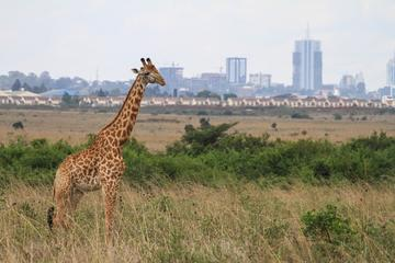 Nairobi National Park and David...